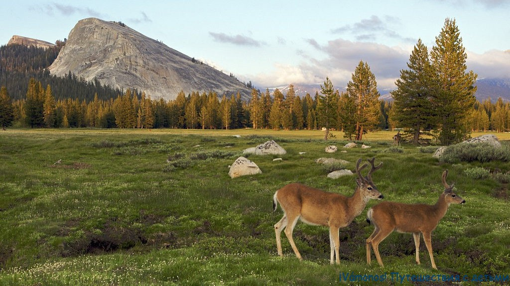 Tuolumne meadows. Туолумнские луга в Йосемити